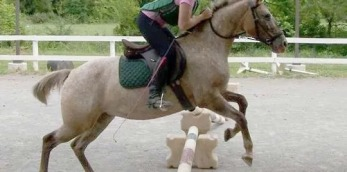 gallery/dos equine - jumping horse review
